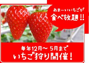 イチゴ狩り開催!